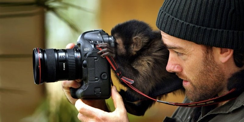 Monkey looking through a camera view finder