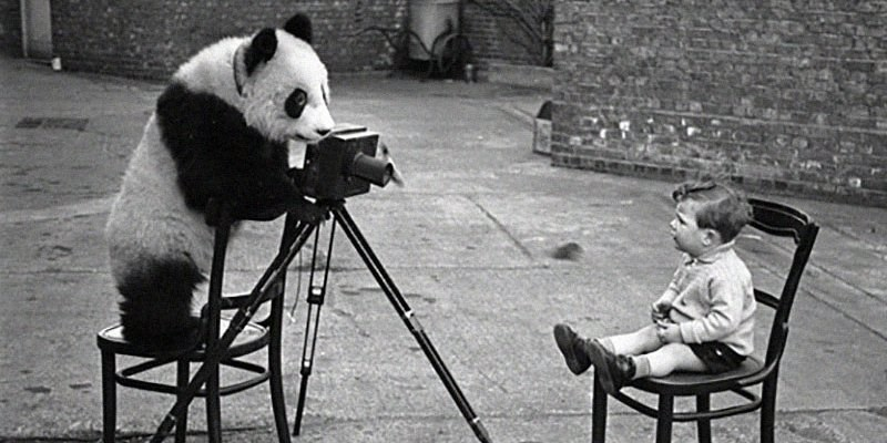 Black and white photo of a panda taking picture of a kid on a chair.