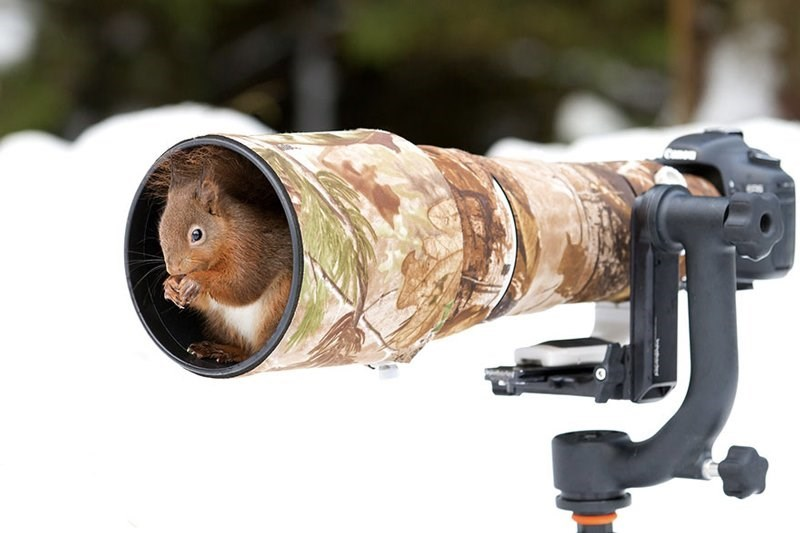 Squirrel taking refuge inside the flare guard of a camera.
