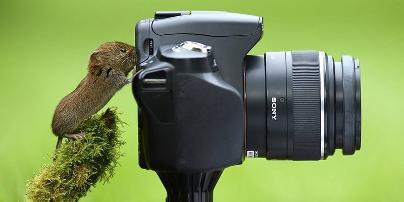 Really cute little mouse looking right through the view finder of a Sony DSLR