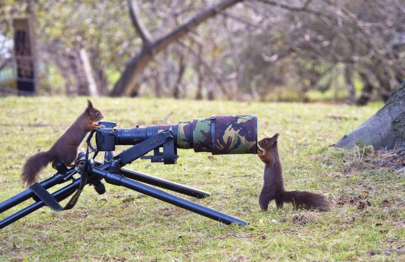 Squirrels screwing around with a tripod mounted camera.