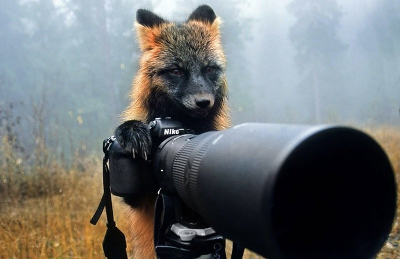 Foxy photographer