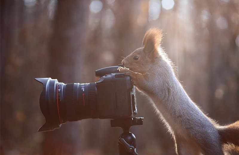 Squirrel who is a better photographer than you.
