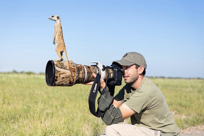Man with massive zoom lens that has a meerkat standing atop of it.