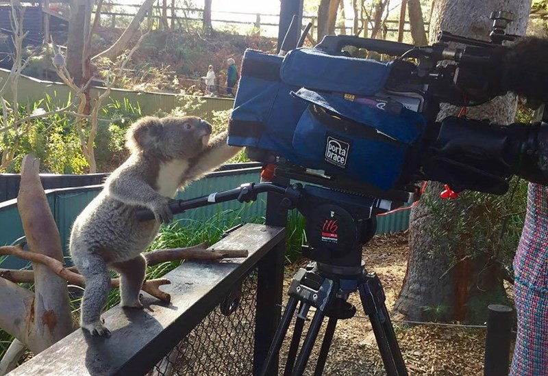 Koala bear turning a camera like this is his third time directing a movie.