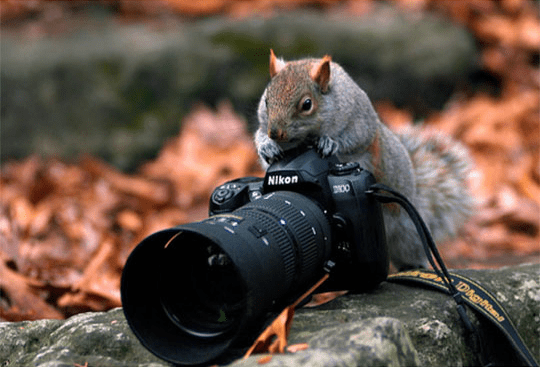 Squirrel on a Nikon camera