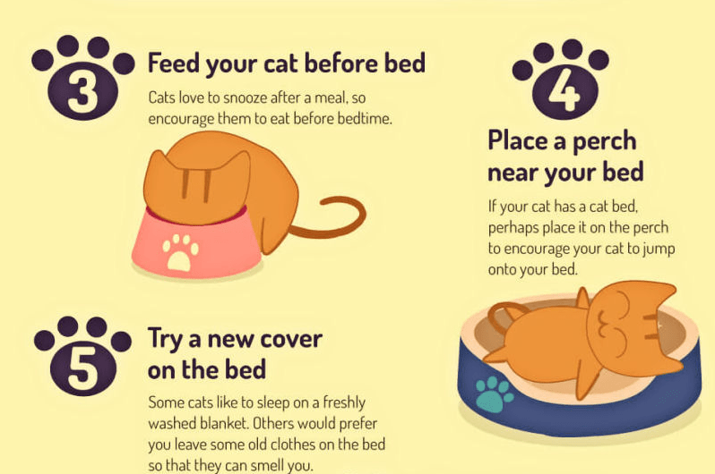 More tips for getting a cat to sleep the times you want.