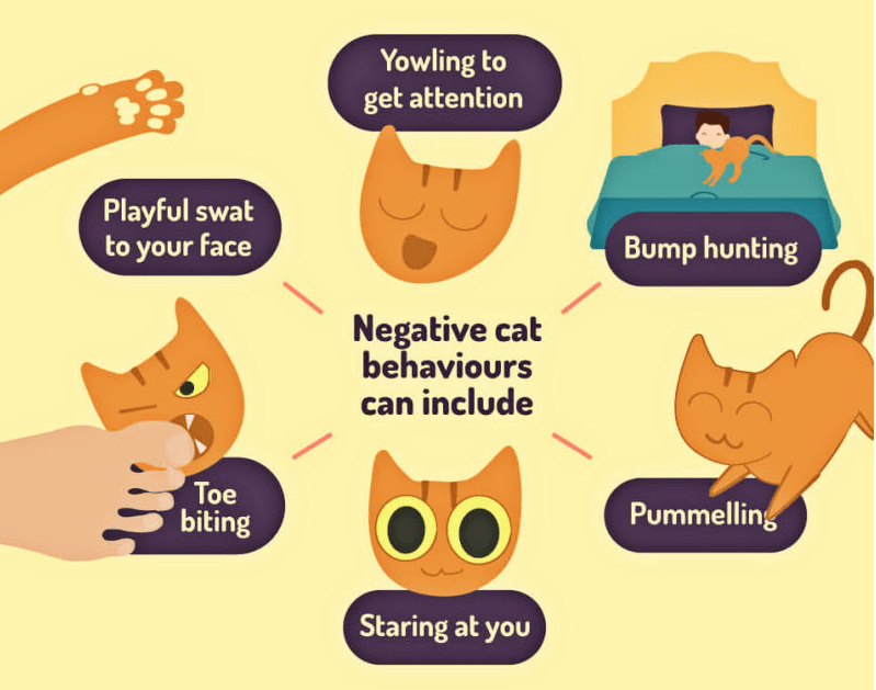 List of things cat will do to you while sleeping.