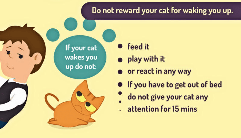 List of things to no reward your cat with for waking you up.