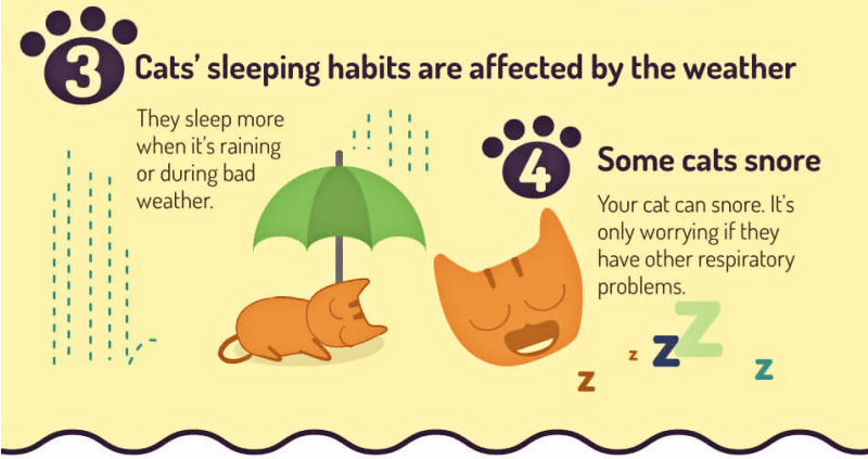 Note about how cats change their sleeping habits when it rains and other weather that affects their behavior.