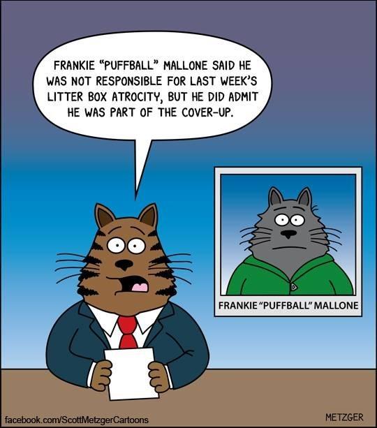 cat news bulletin.