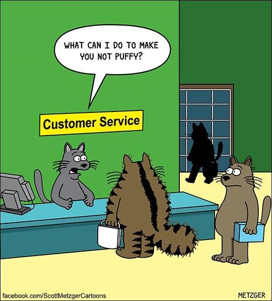 Cat customer service asking what they can do to make him less puffy.