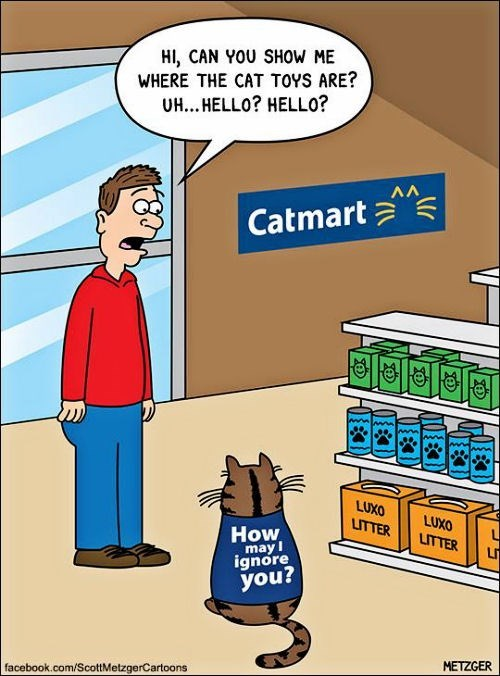 Walmart version for cats, catmart