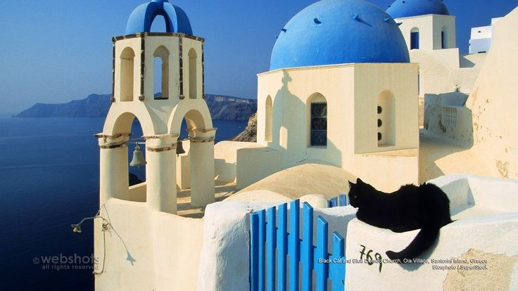 Black cat chilling on the white and blue rooftops of Santorini, Greece.