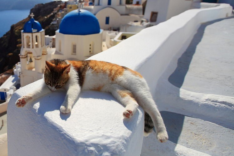 Cat chilling on the white steps of Fila in Santorini, Greece.