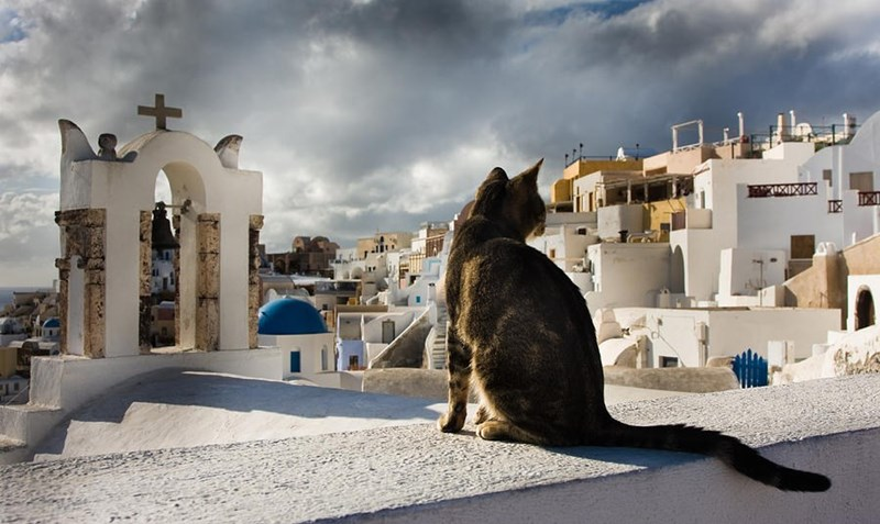 Dramatic cat picture of Santorini Greece, probably Fila