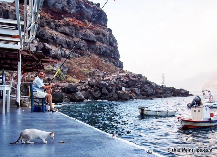 Cat enjoying some fish from the fisherman in the lower part of Fila, Santorini Greece.