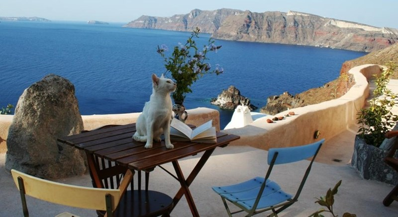 Cat on a cafe table in Santorini Greece.