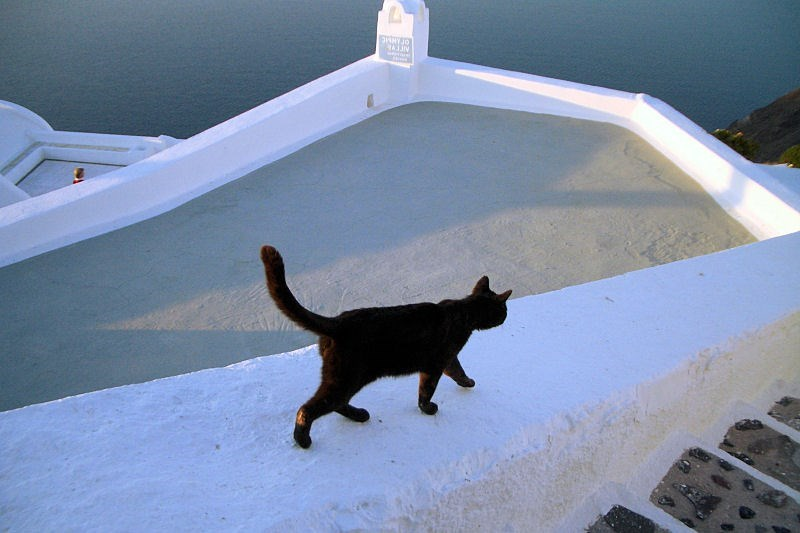 Black cat walking in Santorini