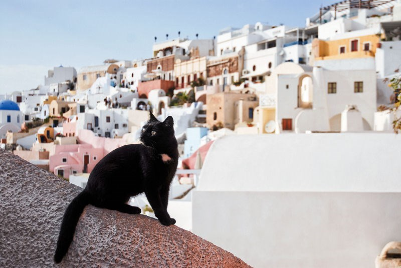 Santorini Black cat in the morning