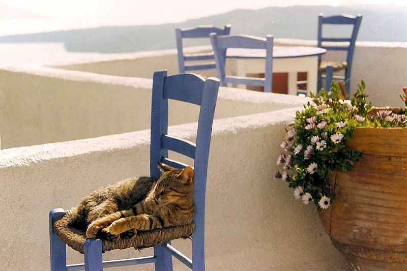 Cat sleeping on a blue chair in Santorini