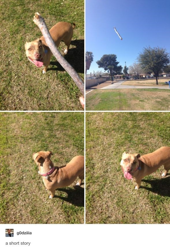 a very funny short story of a dog and going to catch a stick