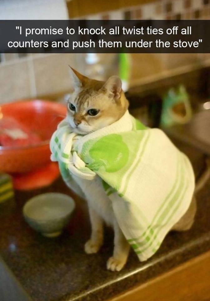 """Cat - """"I promise to knock all twist ties off all counters and push them under the stove"""""""