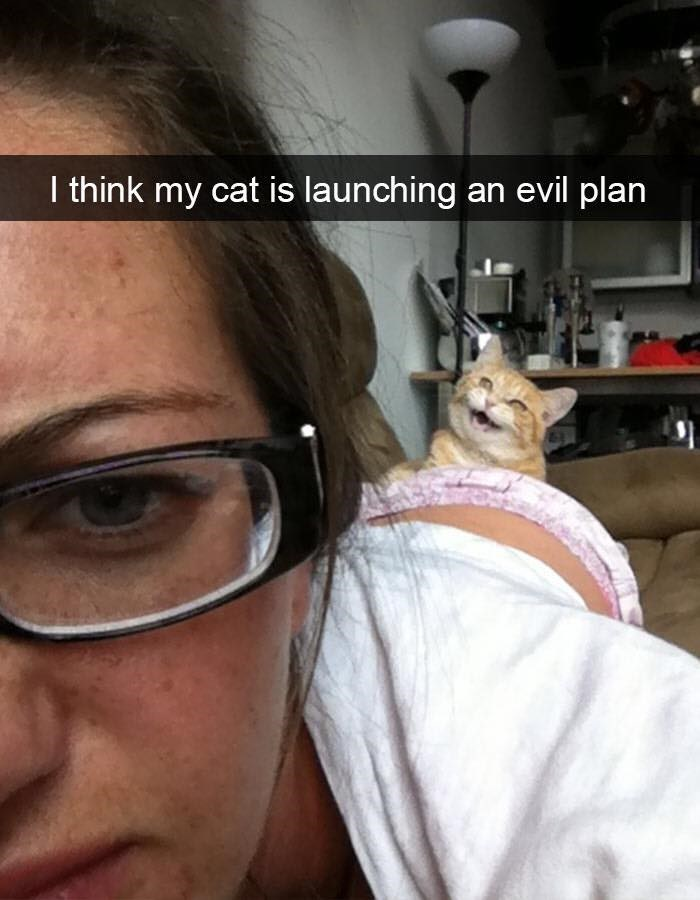 Eyebrow - I think my cat is launching an evil plan