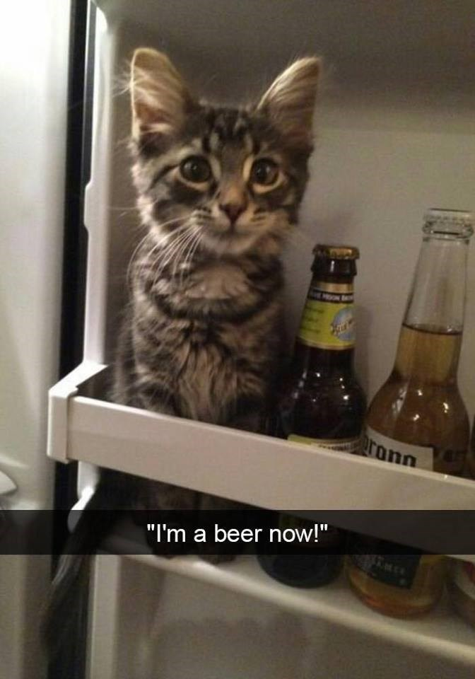 """Cat - ronn """"I'm a beer now!"""""""