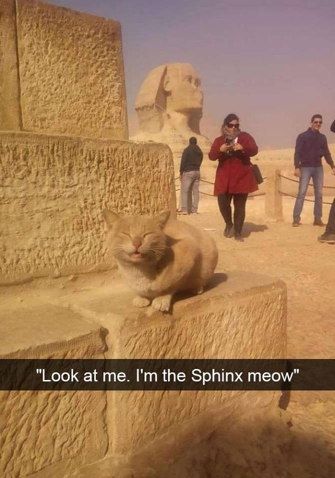 """Adaptation - """"Look at me. I'm the Sphinx meow"""""""