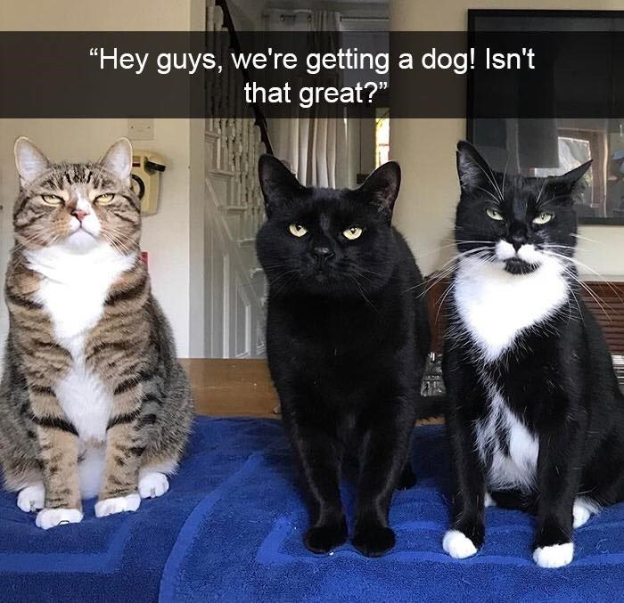 """Cat - """"Hey guys, we're getting a dog! Isn't that great?"""""""
