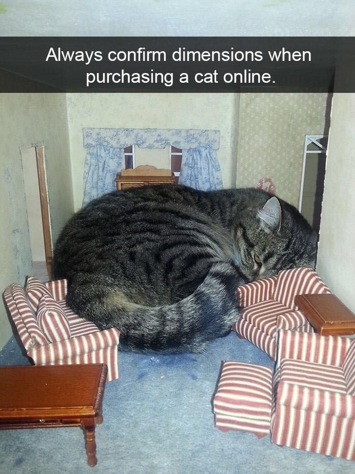 Cat - Always confirm dimensions when purchasing a cat online.