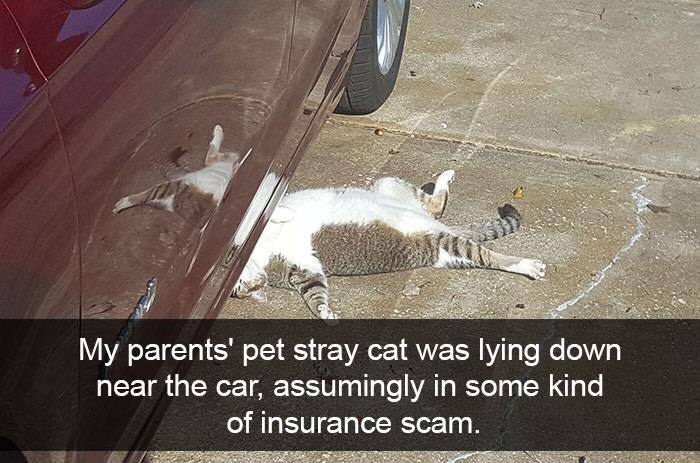 Cat - My parents' pet stray cat was lying down near the car, assumingly in some kind of insurance scam.
