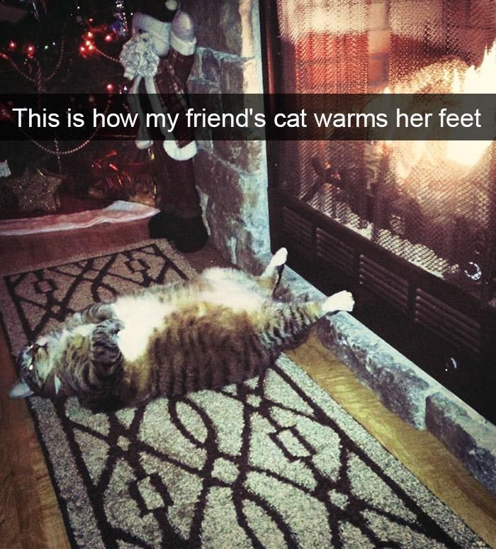 Sky - This is how my friend's cat warms her feet