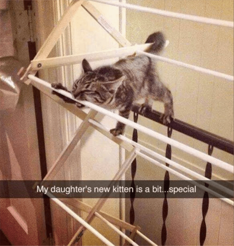 Cat - My daughter's new kitten is a bit...special