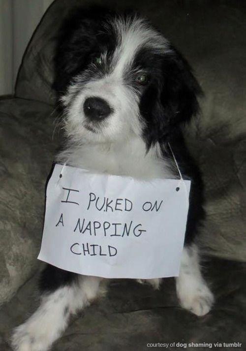 Dog - IPUKED ON A NAPPING CHILD courtesy of dog shaming via tumblr