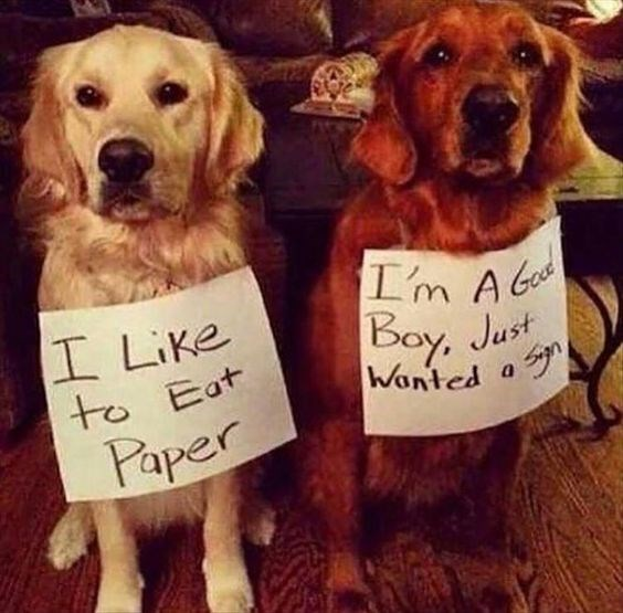 Dog - Im Ab I Like to Eat Bay, Just Wanted a Paper