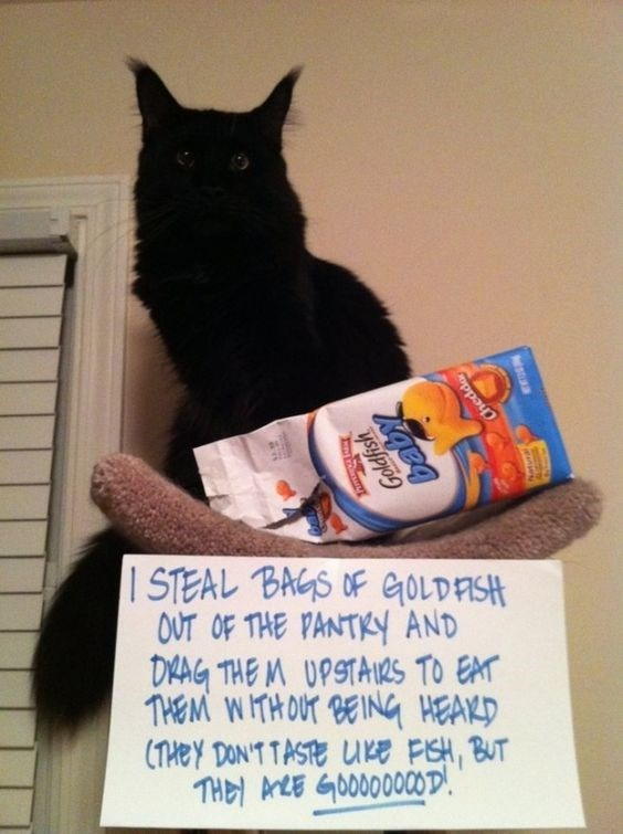 Cat - I STEAL BAGS OF GOLDFISH OUT OF THE PANTKY AND DYAG THE M UPSTAIRS TO EAT THEM WITHOUT BEING HEAKD (THEY DON'TTASTE Ure FSH, BUT TH ALE GOOD000OD Goldfish igeq Chedd