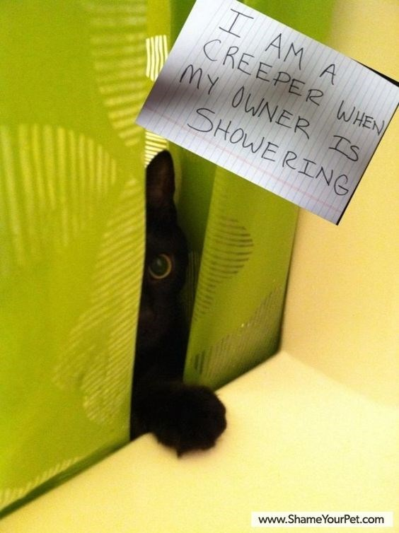 Green - I AM A CREEPER WHEN MY OWNER IS SHOWERING www.ShameYourPet.com