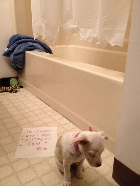 Dog - 7he shower curtain was too long so I fixed it -Ellie
