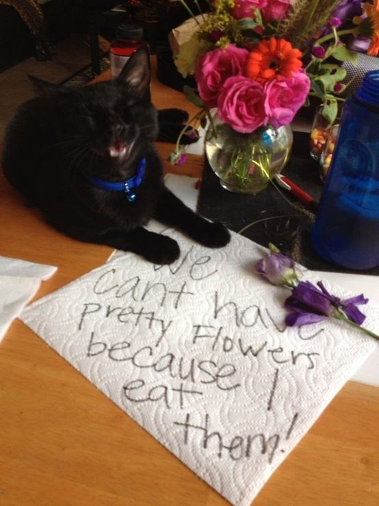 Cat - Cant ha Prefty Flowers because Cat thery