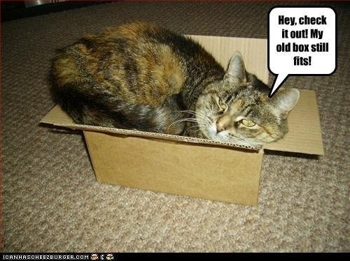 a tabby cat sitting in an old box saying that his old box still fits him like a glove