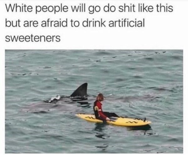 funny meme about life with pic of white person on a surf board next to a shark