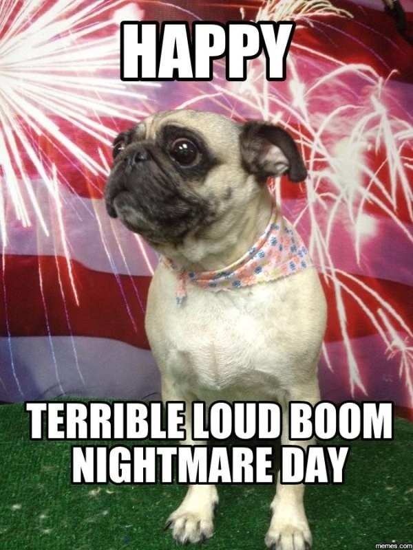 funny meme about life as a dog getting scared by fireworks on the fourth of July