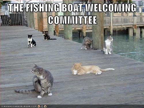 a picture of a bunch of cats waiting for the fishing boat to come back into the dock