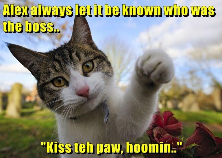 A funny meme of a cat telling the human to kiss his royal paw