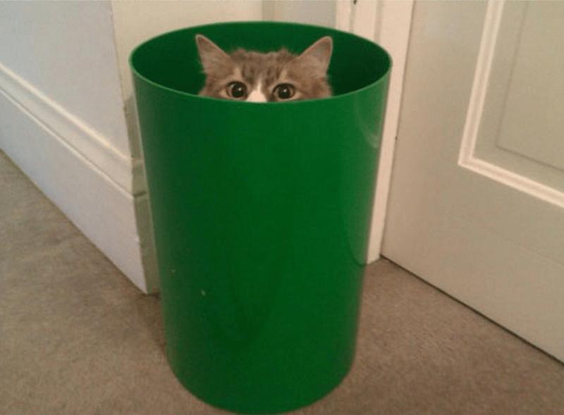 Cat hiding in a green trash bin