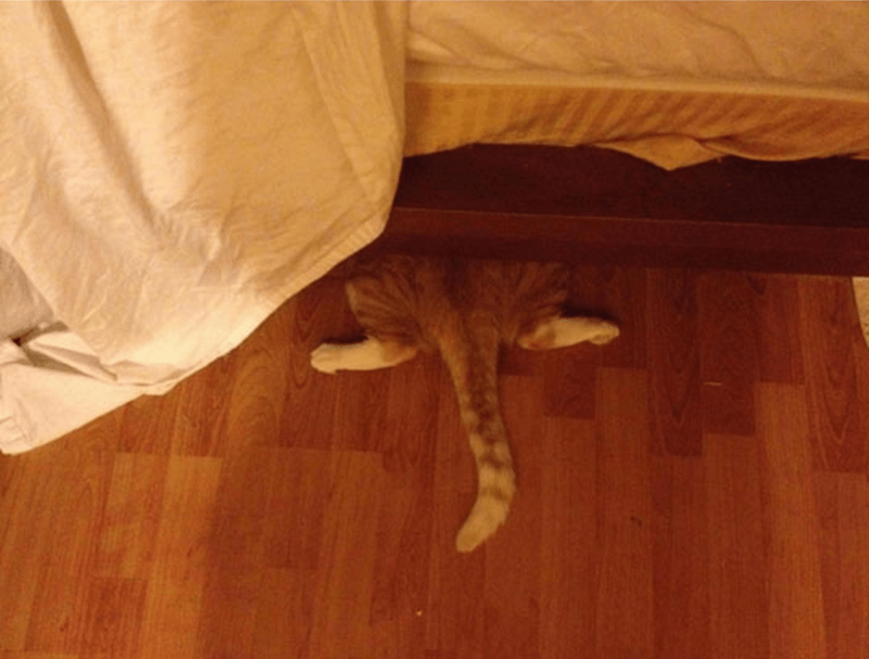 cat trying to hide under the bed on hardwood floors.