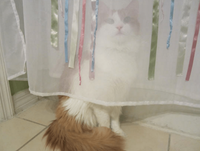 Cat doing a bad job of hiding behind the shower curtain.