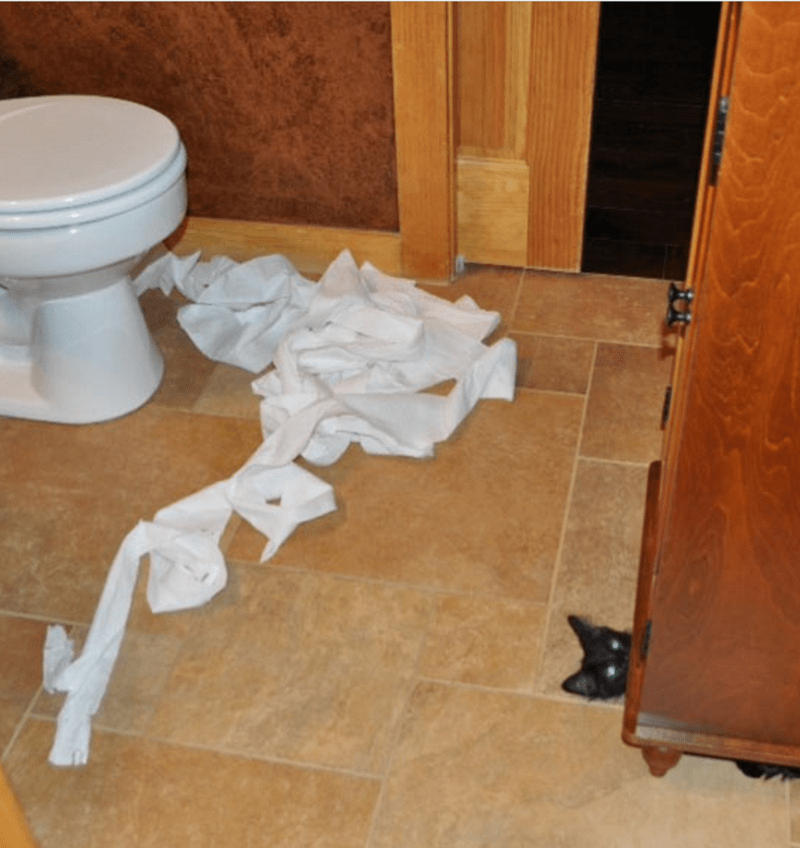 Cat who made a mess of the toilet paper hiding under the wooden shelves.